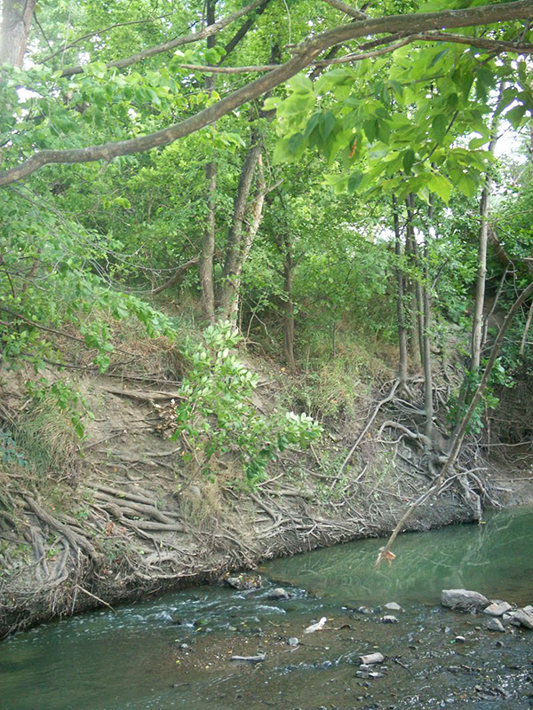A part of Bear Creek