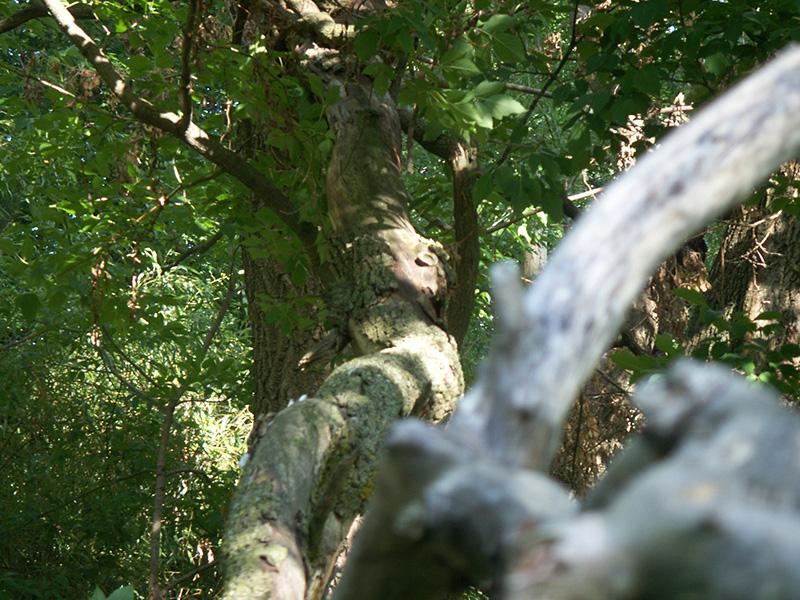 This fallen branch made for an interesting shot.