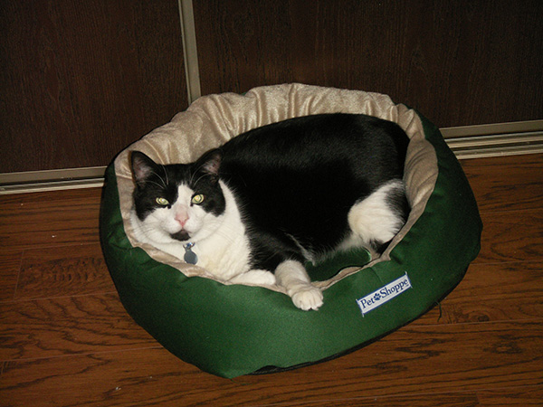 Cedric in Kobol's bed!
