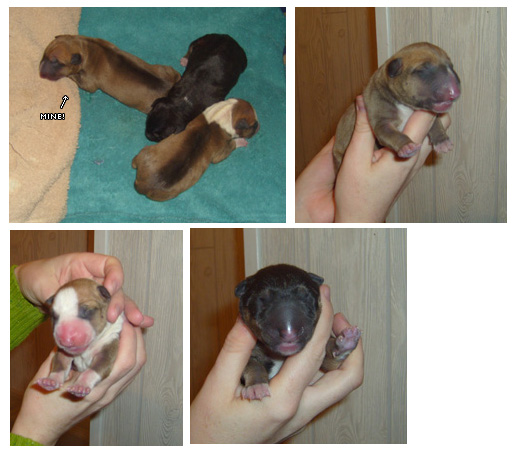 Kobol with her brother (Oliver) and sister (Circe) around 10 hours old.