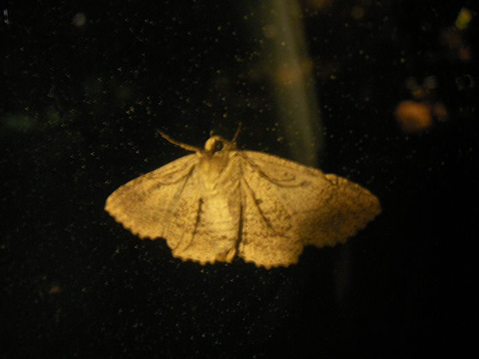 Moth on my window after a storm.
