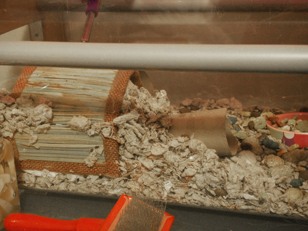 Buttercup's nest. She dragged the toilet paper roll there herself and then covered it in bedding. XD