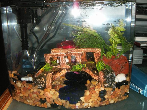 Basil's new tank!