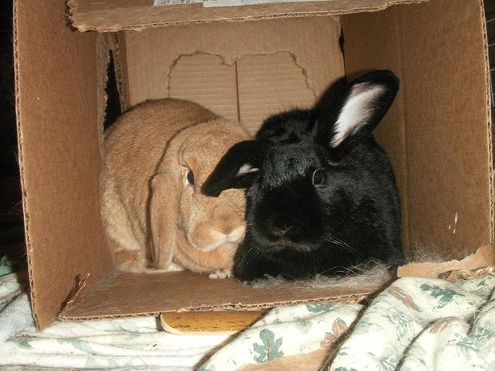 Pam's bunnies! Shadow and Subaru.