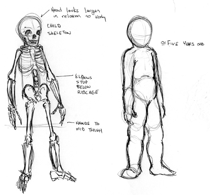 An extra project for anatomy. The skeleton of a child and that of an adult are very different proportionally.